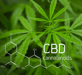 CBD 101: Crash Course